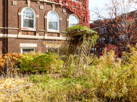 building bricks: Overgrown fall garden in the Hyde Park neighborhood of Chicago, IL, USA.