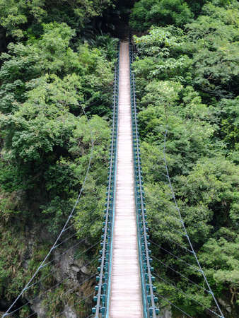 Hanging bridge leading into the thick green jungle.