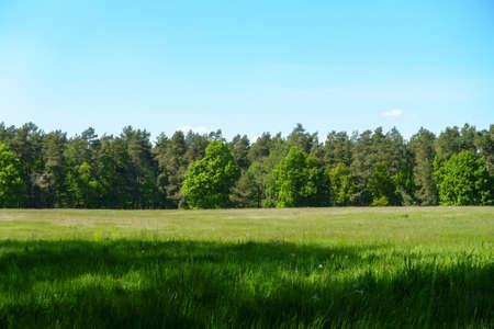 treeline: Treeline behind a summer field. Stock Photo