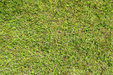 tightly: Vibrant green leaves tightly covering the ground.
