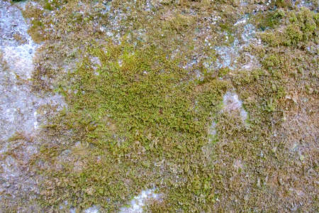 Close-up view of moss-covered wall. Stock Photo