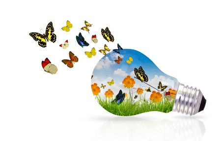 ecofriendly: Bulb and fresh spring green grass with butterfly