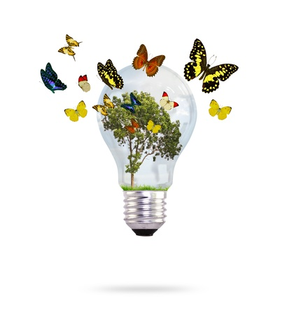 Bulb with tree and butterfly photo