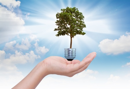 Light bulb in hand (green tree growing in a bulb) Stock Photo - 10948248