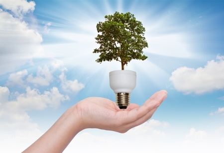 Light bulb in hand (green tree growing in a bulb) Stock Photo - 10944788