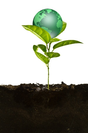 environmental awareness: Environmental concept. Small earth plant