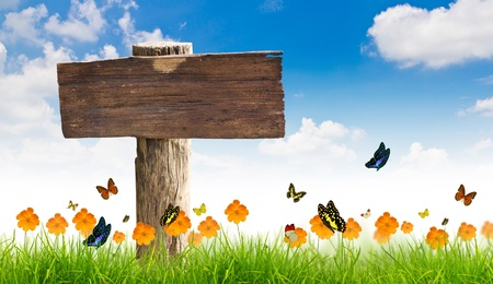 Wood sign with Yellow flowers, green grass and butterfly photo