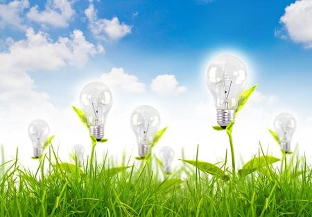 green light bulb: Eco concept -light bulb grow in the grass against blue sky