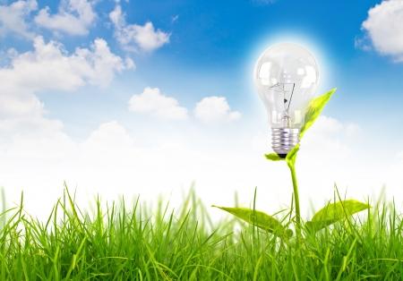 Eco concept-gloeilamp groeien in het gras tegen blauwe hemel Stockfoto