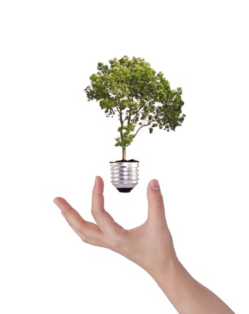 Light bulb in hand (green tree growing in a bulb) photo