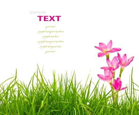 garden frame: Beautiful pink flowers and fresh spring green grass isolated on white background. Stock Photo