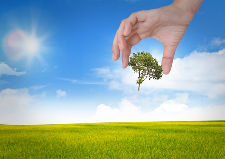 Eco concept : tree in hand against the sun and the blue sky Stock Photo - 11356247