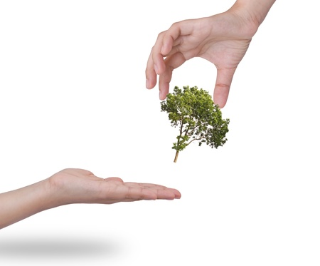 emergent: Hand holding a tree