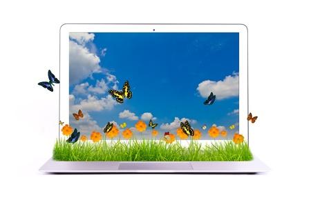 Laptop Pojedyncze z żółty kwiat na trawie i motyl