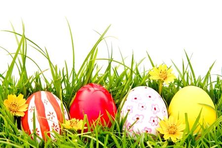 egg plant: Huevos de Pascua con flores en la hierba verde fresca sobre fondo blanco