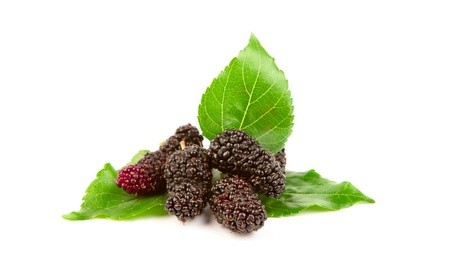 bramble: Mulberry with leaves Isolated on a white background