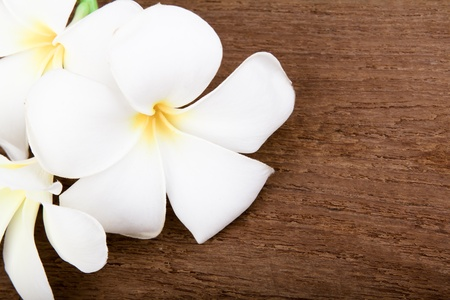 White plumeria flower on Wood photo