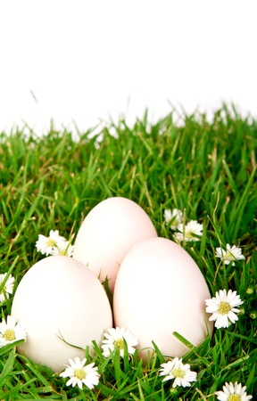 Eggs in the grass with flower photo