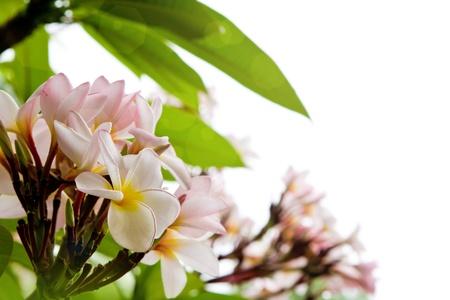 Beautiful white flower photo