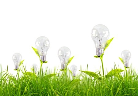 Eco concept -light bulb grow in the grass against blue sky photo
