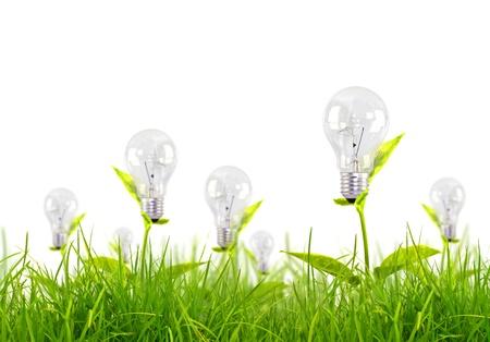 natural light: Eco-concepto bombilla crecer en la hierba contra el cielo azul
