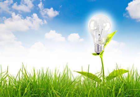 Eco concept-żarówka rośnie na trawie przed błękitne niebo Zdjęcie Seryjne