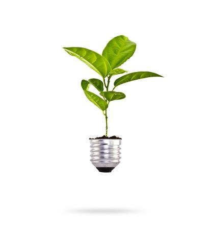 Concepto de Eco: árbol frondoso que crece de una bombilla. Foto de archivo