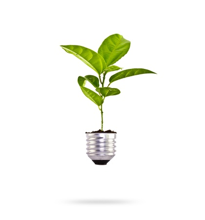 ecological problem: Eco concept: green tree growing out of a bulb. Stock Photo