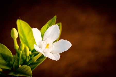white flower over brown background photo