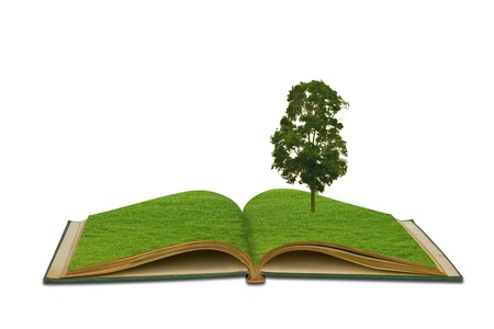 Tree growing from a book Stock Photo - 13625540
