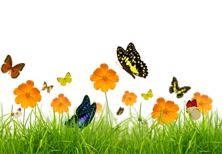Yellow flowers, green grass and butterfly photo