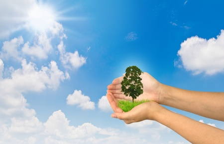 Hands holding a small tree photo