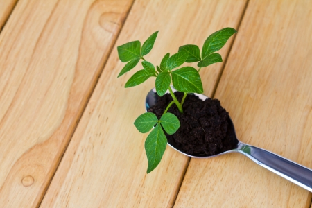 Growing green plant in spoon on wood table photo