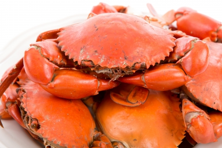 Steamed crabs on white plate photo