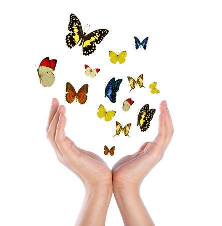 donna farfalla: Mano che regge farfalle Archivio Fotografico