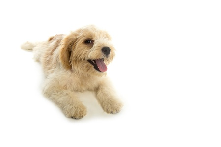 Puppy dog isolated on  white background photo