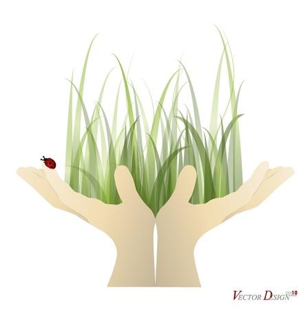 lady bug: Lady Bug und frisch Fr�hling gr�ne Gras auf der Hand