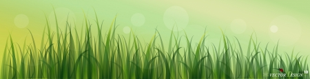 Lady bug and Fresh spring green grass background.  Vector