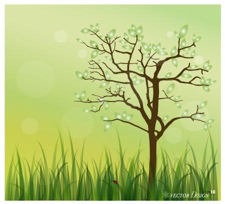 lady bug: Lady Bug und Fresh spring green grass Hintergrund.