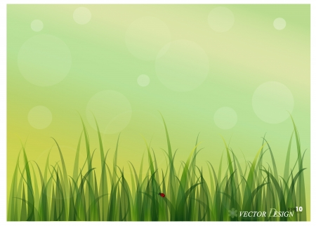 lady bug: Lady Bug und frisch Fr�hling gr�ne Gras Hintergrund.