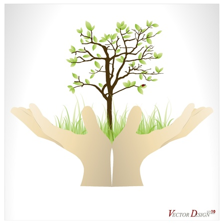 forestation: Hand holding a tree that show the growth your business.  Illustration