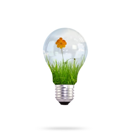 flower bulb: light bulb with beautiful flower inside Stock Photo
