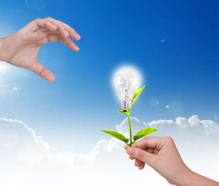 Light bulb with small plant in hand photo