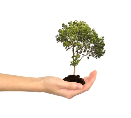 Female hands and tree Stock Photo - 14941448