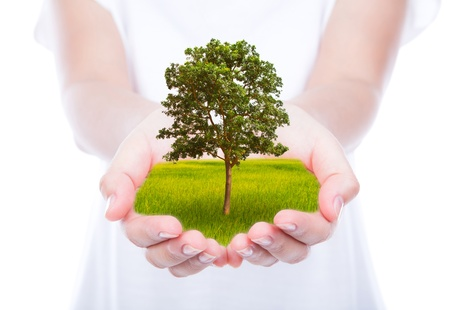 cupped hands: Tree in woman hands over body isolated on background.