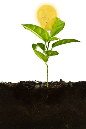 Plant above with bulb and the soil Stock Photo - 15093621