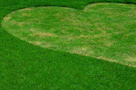 Image of fresh spring green grass ( Heart shape ) photo