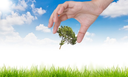 Eco concept : tree in hand against the sun and the blue sky photo