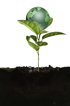 gaia: Environmental concept. Small earth plant