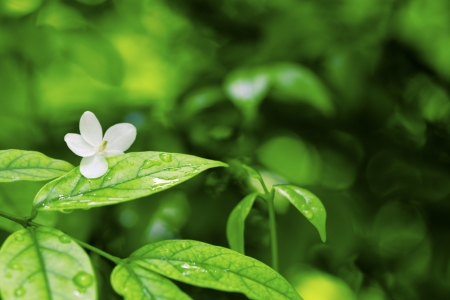 White flower and leaves and drop Stock Photo - 17485052